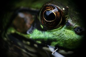 Frog Formerly Known As Prince by lapointe