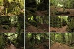 Puzzlewood 2 by Tasastock