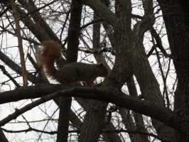 Squirrel in the Branches by Toderico
