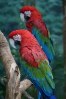 Macaw 008 by MonsterBrand-stock