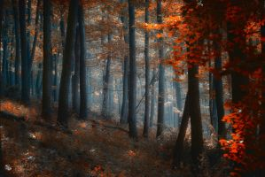 Light-Trap by ildiko-neer