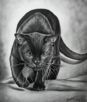 cat,drawing,karakalem,ercansebat by ercansebat