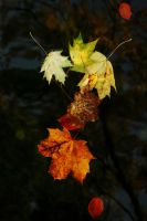 A Reflection on Autumn by EarthHart