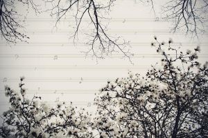 Vivaldi - The Four Seasons by LevisPhotography
