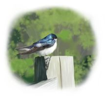 Tree Swallow by Yggdrassal