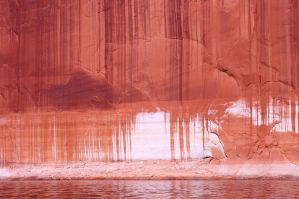 Red Clay by richbrenner