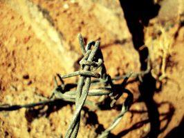 Barbed Wire by Superbiaa