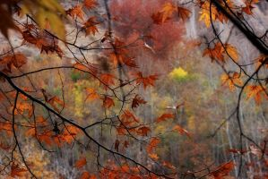 colorful leafs by maryammoradi2