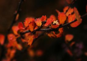 Autumn Leaves by lin9x