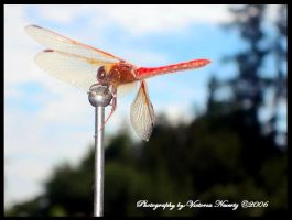 Doug the Dragonfly by IcameAsARat