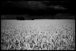 IR Field by echomrg