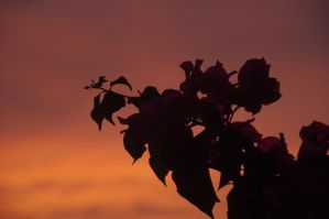 Against the Sunset by sudd
