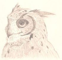 Owl by shiroi-youkai