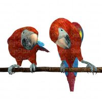 2 Red Macaws Perched - Stock by Shoofly-Stock