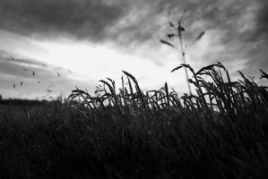 The Mourning Field by AbstractPotential