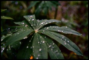 Droplets by epafin