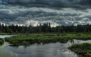 The Marsh by midnightstouch
