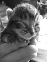 3 Day Old Kitten by make-a-snappy