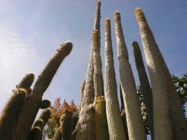 Cactus Of The Exotic Gardens by ErinM2000