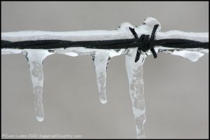 Barbed Ice by FramedByNature