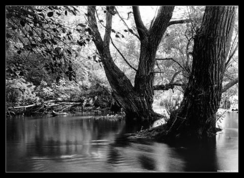 Trees in water by bigsdawg