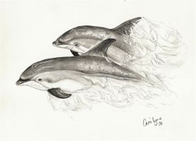 Dolphins swimming together by carriephlyons
