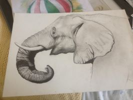 Elephant. by ventrilequism