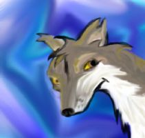Coyote by guardianleyevermore