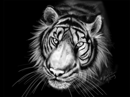 Speed-painting Tiger by Marzzunny