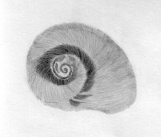 Shell Pencil Sketch by Geak-of-Nature