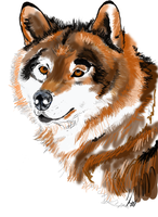 Wolf wip by Horsegal15