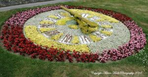 Flower Clock. by AdrianDunk