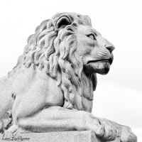 -The Lion- by Noeth