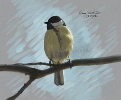 Great tit on branch by makangeni
