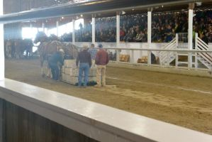 Horse Weight Pulling Competition 10 by Miss-Tbones