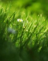 Grass and others by ColdWinter97