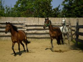 three horse galop by Promiseoftheraven