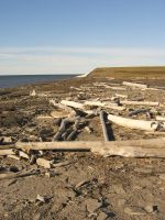 Driftwood beach 2 by Arctic-Stock