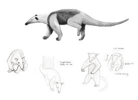 Tamadua Sketches by mazil