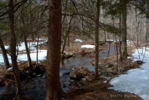 Tranquil stream by SoulsLastSanctuary