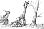 The Diversity of the Campopteroids by Thobewill