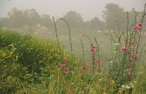 Flowers in mist by yasminstock