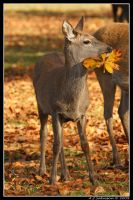 Leaf It Alone Deer by andy-j-s