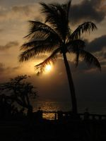 Sunset Palm 1 by MapleRose