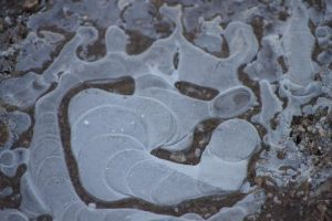 Puddle od Ice by rogerdurling