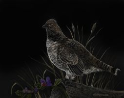Ruffed Grouse and Blackberries by ChuckRondeau