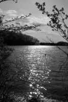 sun shimmering on lake - bw by euphoricmadness