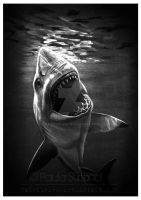 Great White by hatefueled