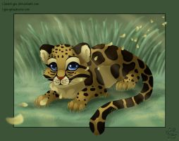 Clouded leopard cub by ClaireLyxa
