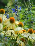 My Gardens 2015, 001 by MadGardens
